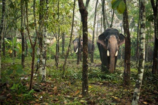 india-forests-6-billion-hero_jpg__1500x670_q85_crop_subsampling-2